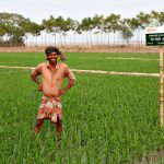 Mohiuddin Gazi is a rice farmer in Bangladesh who has benefited from BRAC's new, saline-tolerant rice varietal.