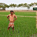 Mohiuddin Gazi is a rice farmer in Bangladesh who has benefited from BRAC's new, saline-tolerant rice varietal.